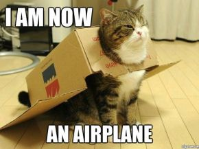 airplane-cat